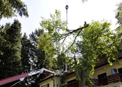 Baumfällungen