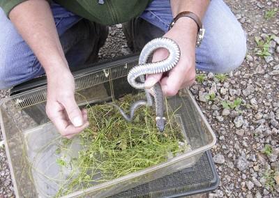 Artenschutz (Eidechsen und Schlangen)