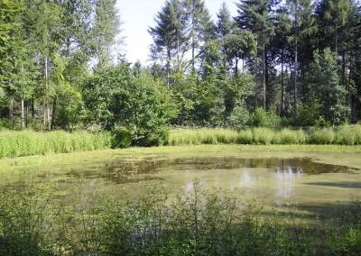 Amphibiengewässer